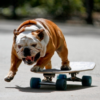 skateboarding-dog